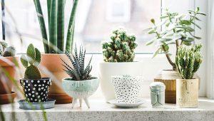 Qu'est-ce qu'une lampe croissance ou lampe pour plante
