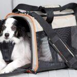 Comment entretenir les sacs de transport pour animaux