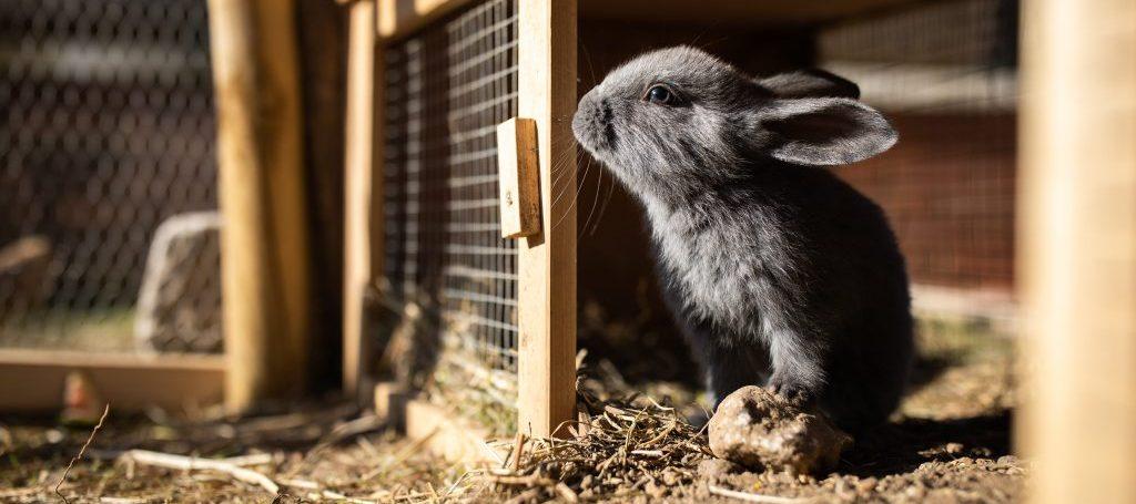 Comment utiliser un clapier lapin