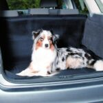 Protection coffre pour chien -image