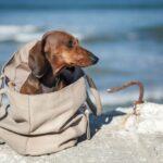 Sac transport chien - image